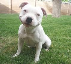HUGE SMILE!
